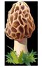 Flèche champignon